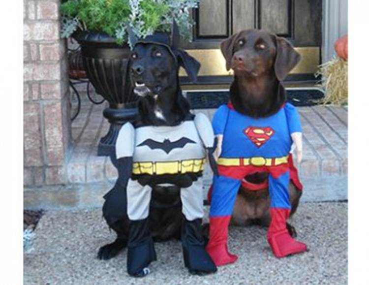 Image from: http://thefamily.com/tag/the-best-dog-costumes-for-halloween/